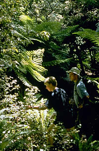 Bush walking in nature trail, New Zealand